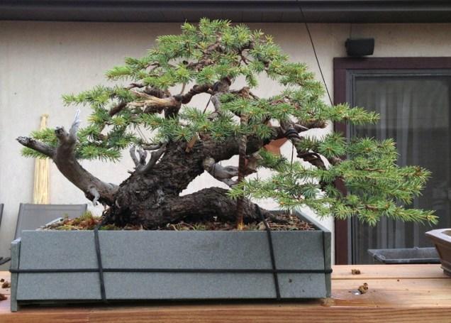 Spruce5_R0415