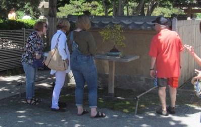 Public admiring the tree.