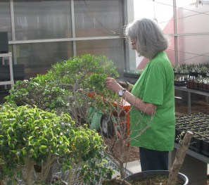 Mary - Working DBG Florida Privet