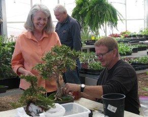 Mary & Larry Ficus Discussion