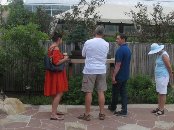 "2017 Denver Botanic Dr. Mark Mills ""One Man Bonsai Show"""