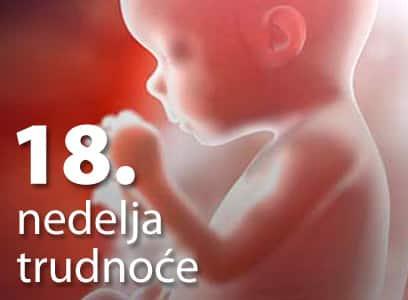 18 nedelja trudnoće