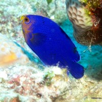 REEF FISH INDEX