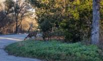 Austin - McKinney Falls State Park -075654