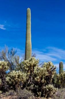 Arizona_Tucson_Tucson Mountain Park_1113
