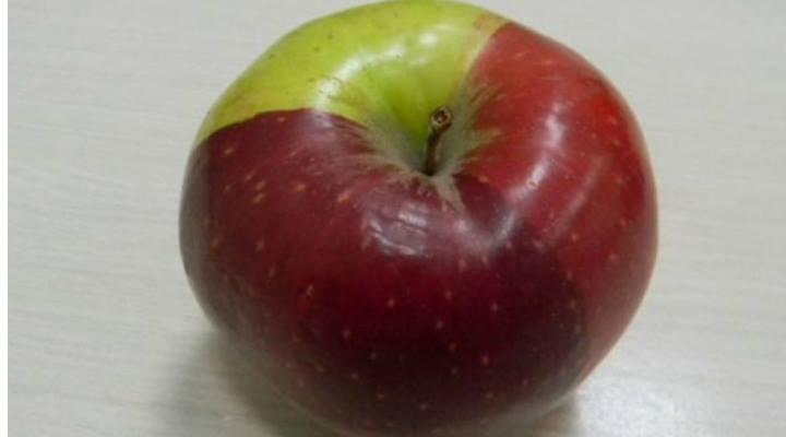Mărul Tricolor. Frumosul de Voineşti a devenit tricolor. Nimeni nu ştie cum s-a întâmplat aşa ceva