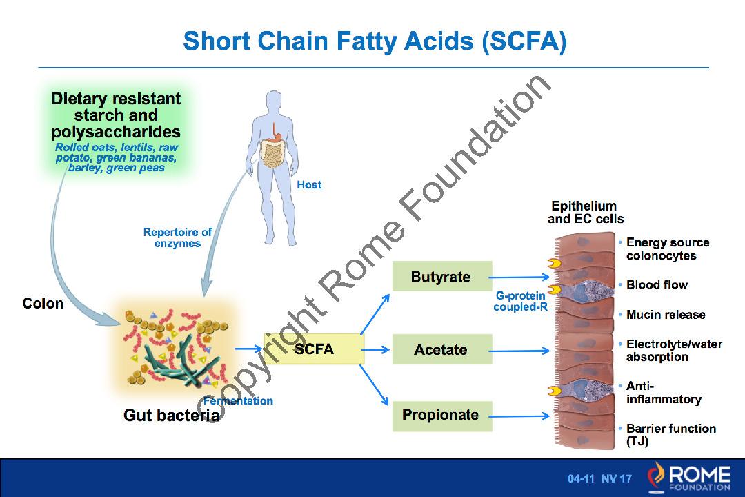 Microenvironment 11 \u2013 Short Chain Fatty Acids \u2013 Rome Online