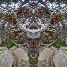 5 Point Lobos Menagerie of the Living