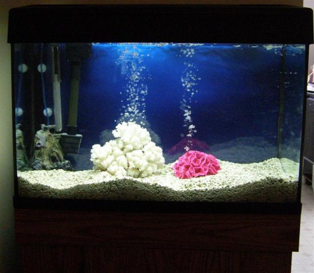 30 gallon fish tank among all different fish tank sizes Images