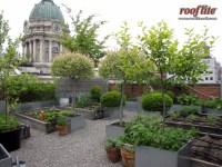 Intensive Rooftop & Intensive Green Roof Types Sc 1 St ...