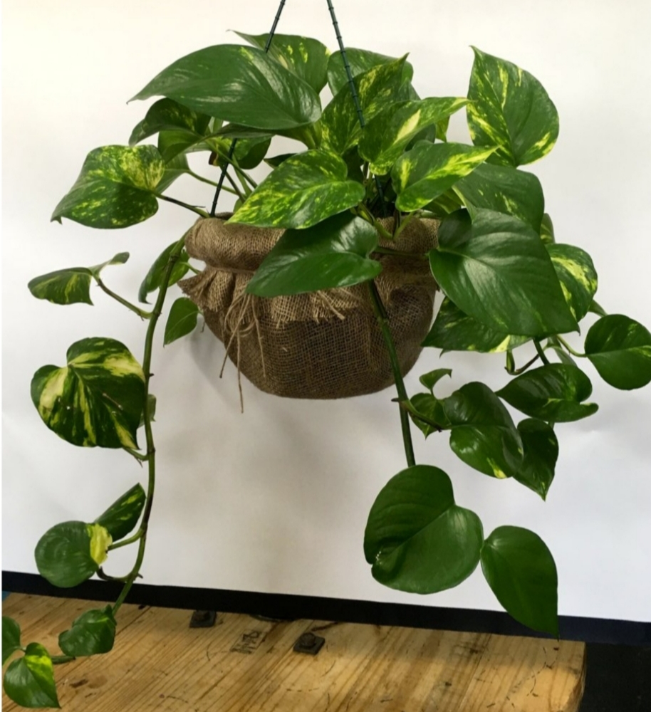 Indoor Plants For The Office Top 10 Indoor Plants For Home And Offices Roots2flower