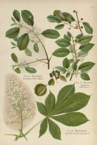 botanical prints   Rosemary's Blog