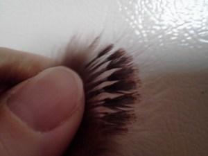 cockerel feathers