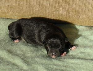 storm puppy2