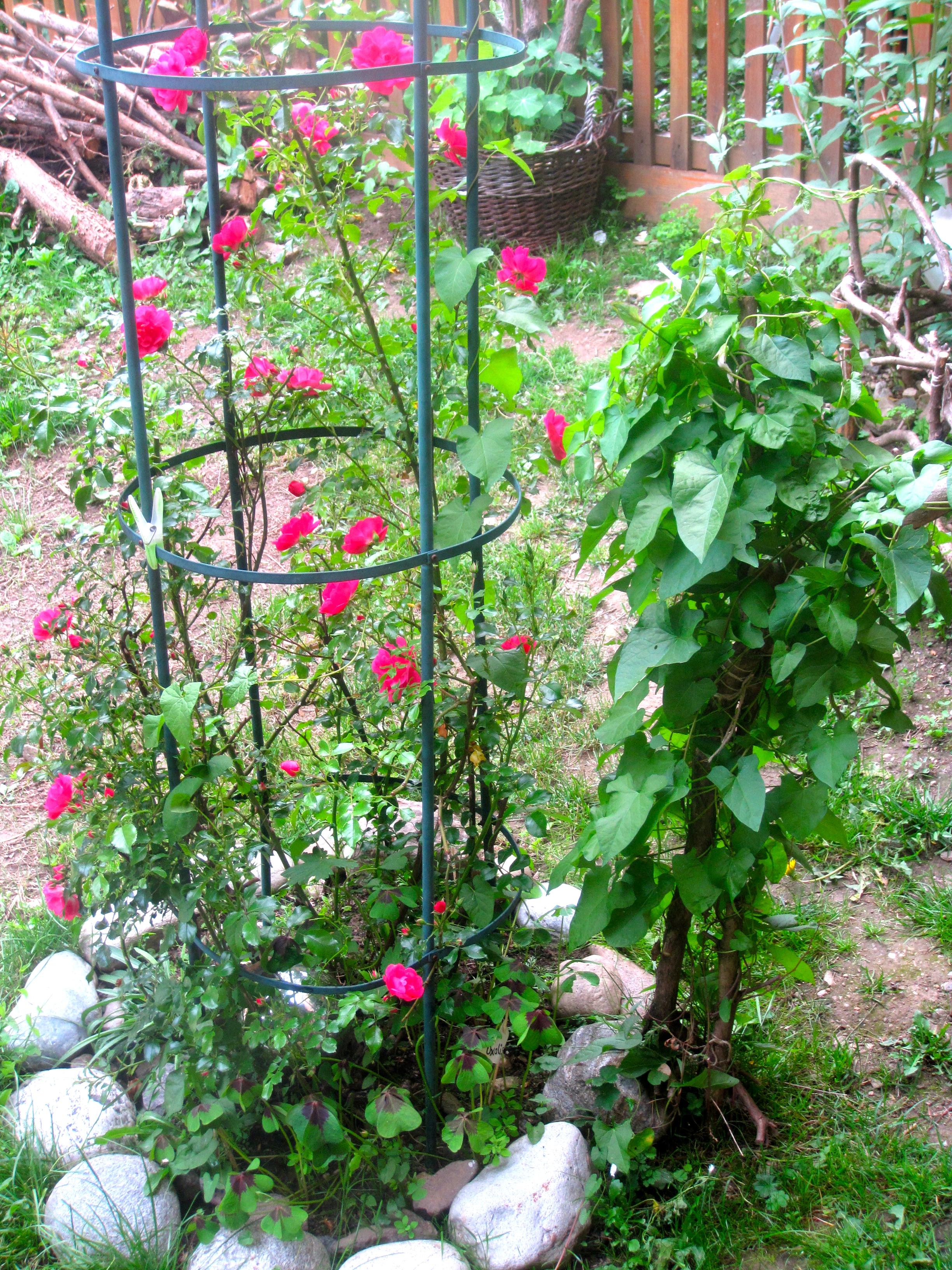 Einfache Gartengestaltung Steingarten 60 Ideen Japanischer