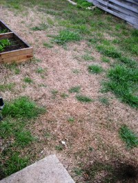 Installing a gravel path and butterfly garden  WIP   A ...