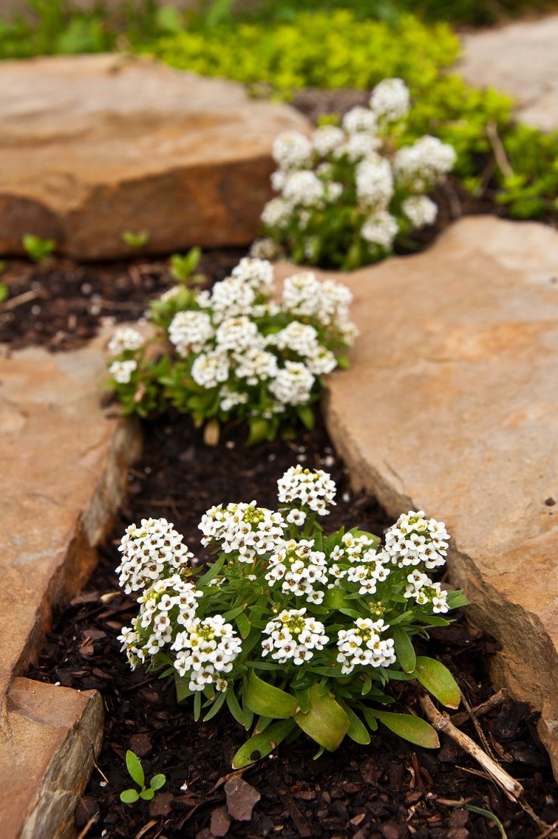 Cordial Texas Lots Flowering Ground Cover Natives A Round Rock