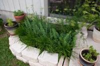 Herb Garden | A Round Rock Garden