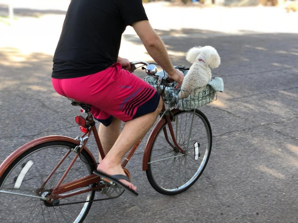 Bike Basket Big W Riding A Bike With Your Dog Biking With Your Dog Safely