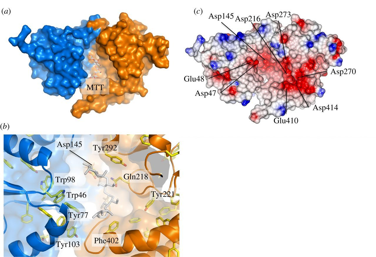 Cash Pool Flensburg Structural And Functional Analysis Of The Solute Binding Protein