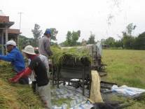 Rice Harvest in Long An