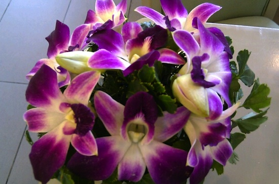 orchids of some consolation