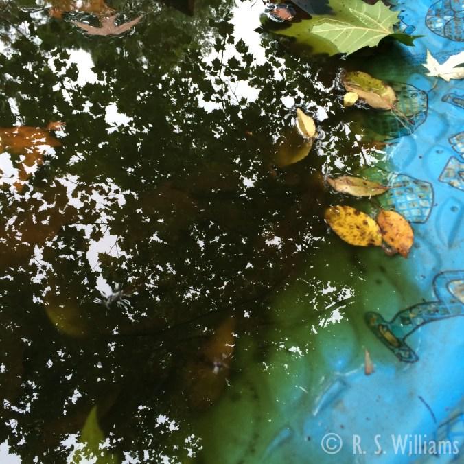 ReflectionsInAKiddlePoolFrogPond_COPY_2015-09-27_12.45.51