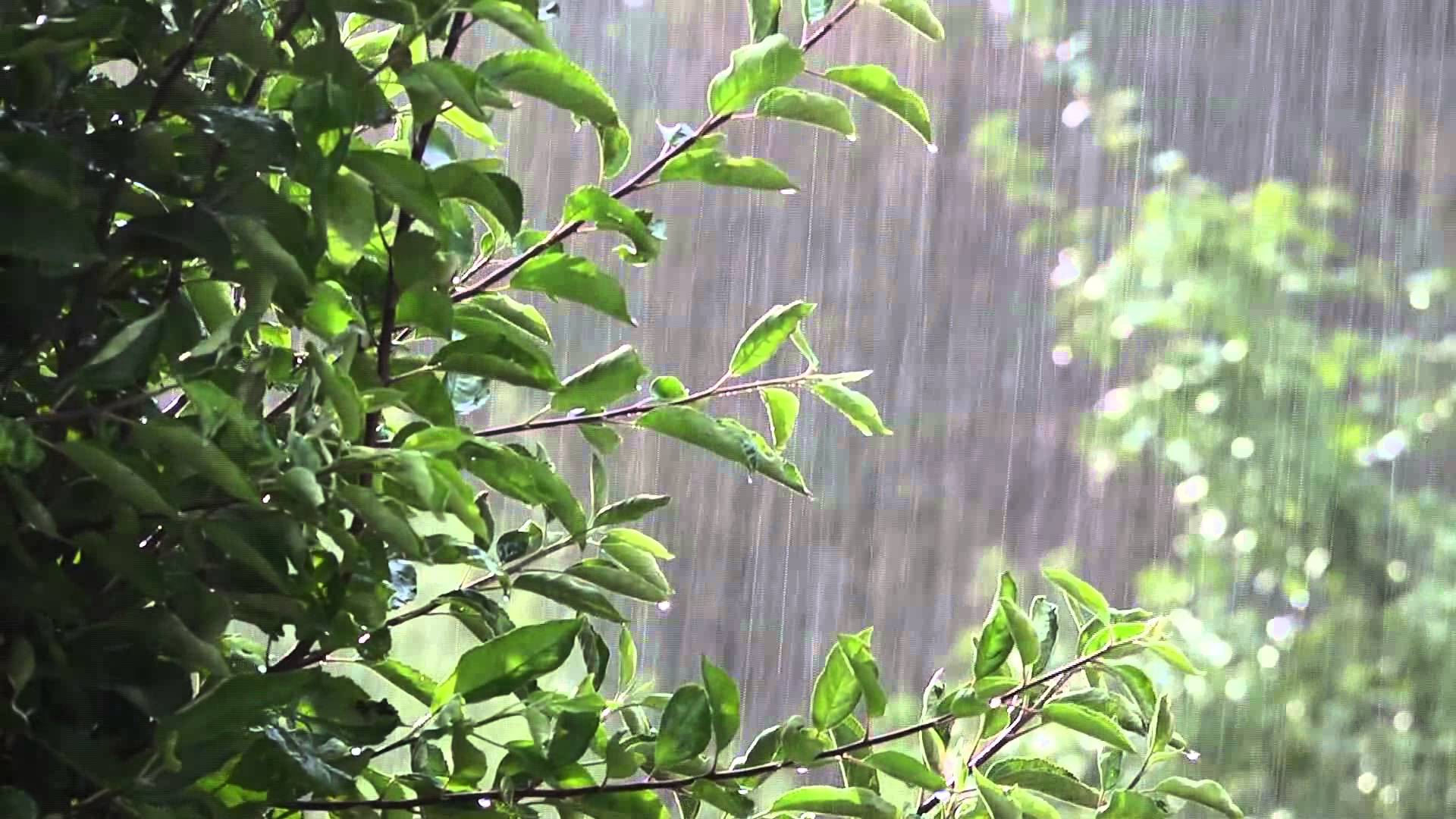 Rainy Fall Day Wallpaper 3 Ways The Recent Rain Hurt Your Tree And How To Fix Them