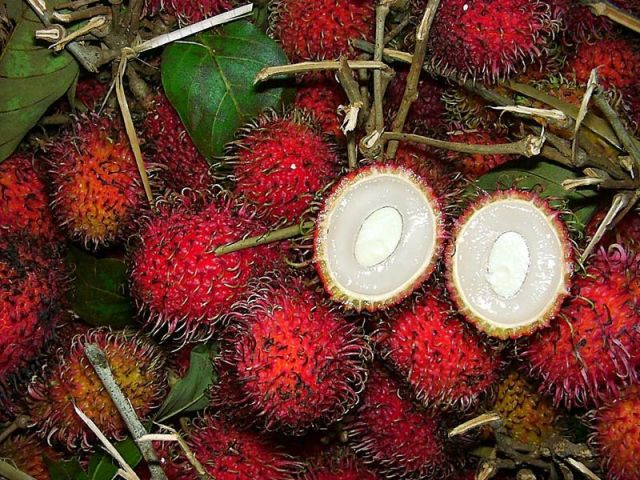"6. Rambutan is the birthplace of the Malay Archipelago. The appearance of this red fruit with a lot of processes explains its name (rambut translated from Indonesian - ""Hair""). Rambutan fruits are small (about 3 cm in diameter) and grow in clusters. The pulp of fruit jelly like yellow-white in color, sweet taste and is rich in vitamin C, calcium, phosphorus and iron."
