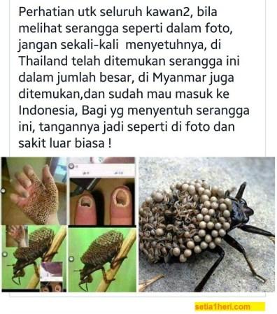 Serangga Thailand pemakan daging manusia,bikin telapak tangan bolong adalah hoax.