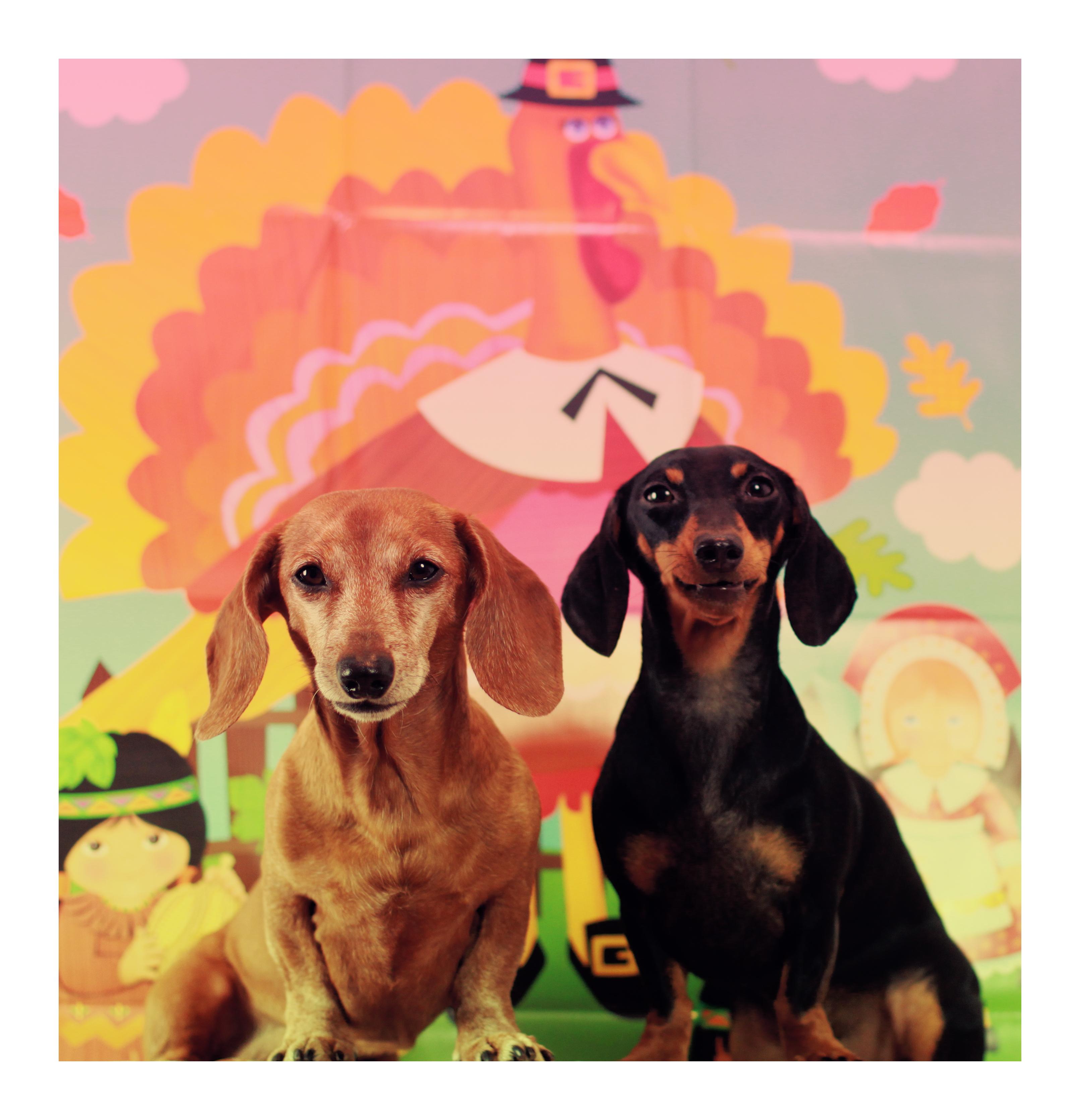 Fall Wallpaper Dog Weenie Happy Thanksgiving Rufusontheweb
