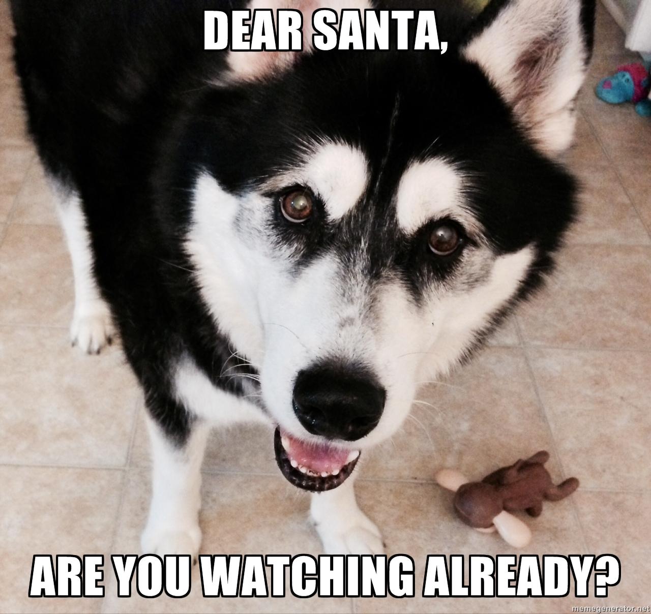 Stupendous Friday Meme Dogpaddling Through Life Super Puppy Memes Puppy Meme Birthday bark post Cute Puppy Meme
