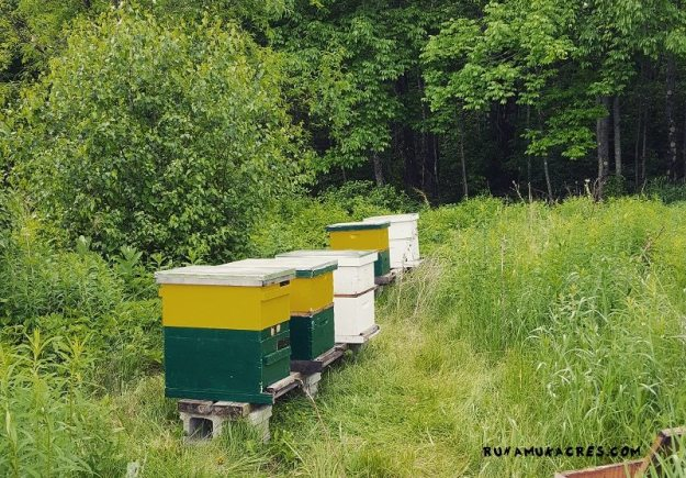 the apiary!