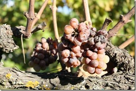 IMG 2971 thumb Los Olivos Wine Tour