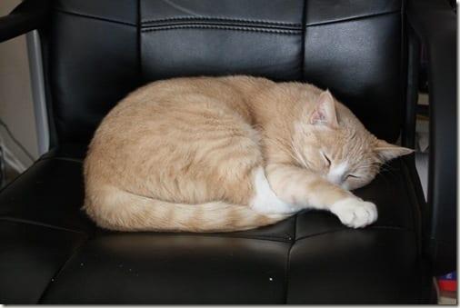 IMG 7315 thumb Not My Cat