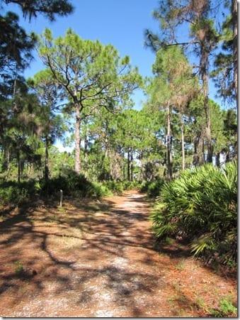 IMG 4010 600x800 thumb Trail Walk in Florida