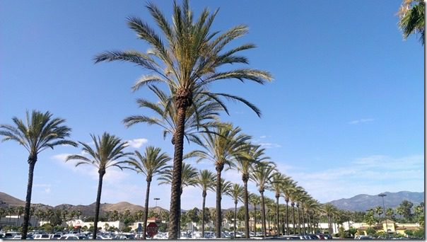 palm trees in orange county 800x450 thumb Follow me (even though I don't know where I'm going)