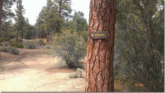trail in big bear 800x450 thumb Xterra Snow Valley Trail 21K Race Recap