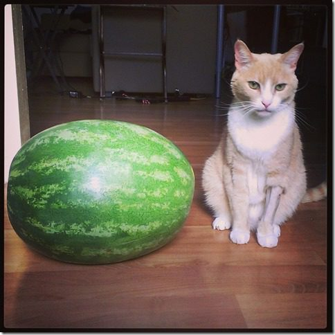 watermelon and a cat 800x800 thumb Silent Saturday–A Watermelon and a cat