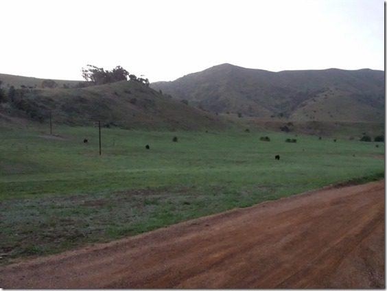 buffalo at start of catalina marathon 800x600 thumb Catalina Marathon Results and Recap