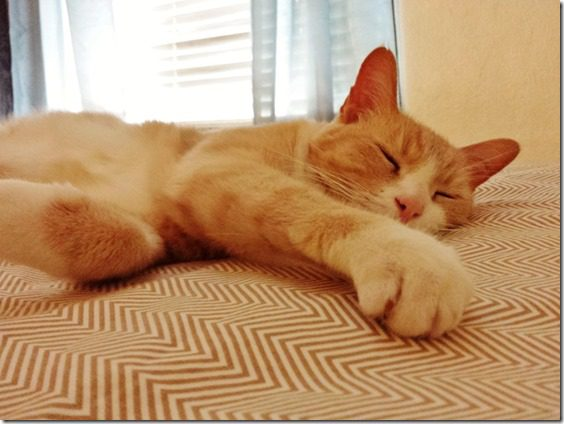 cats love milk 800x600 thumb Top 5 Ways to Use Almond Milk
