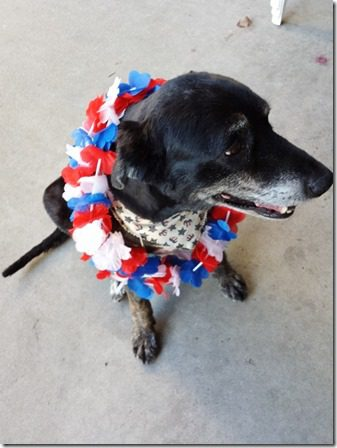 fourth of july dog 600x800 thumb 4th of July Fun and I Had too much Bailey's so, Mistakes Mermaid