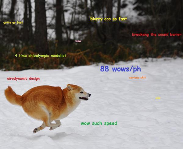 Shiba Inu Cute Desktop Wallpaper Doge Meme The Best Of Doge
