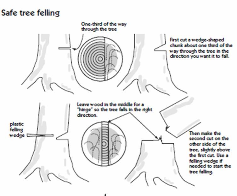 tree felling techniques diagrams