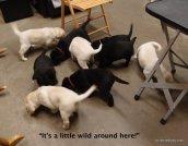 Puppy Chaos