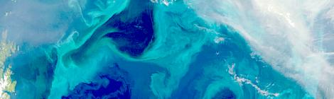 plankton blooms carbon capture