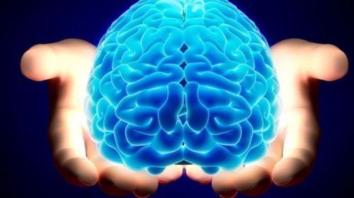 Крахмал благотворно влияет на умственные способности