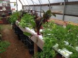 Industrial Country Market - Hydroponic Growing Tubes