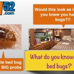 What Campers and RVers Should Know About Beating Bed Bugs