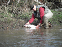 Bob Ellsberg catches and releases a wild steelhead.